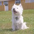 Katalog – Ferienhaus mit Hund in Dänemark