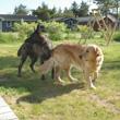 Reisetipps für den Hundeurlaub