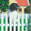 Ferienhaus Dänemark Hund